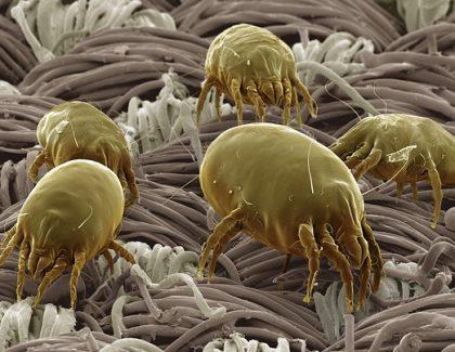 Comprimidos sublinguales de inmunoterapia ante ácaros del polvo