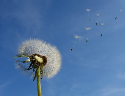 Aspergilosis broncopulmonar alérgica: itraconazol vs corticoides